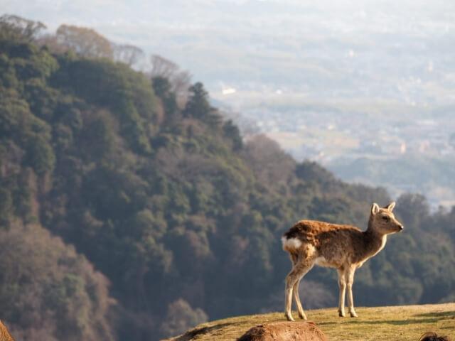 高峰の尾根に佇む一頭の鹿